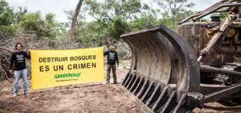 SALTA – Régimen | Frenan la destrucción de bosques ordenada por el Gobernador Urtubey.