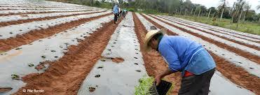 trabajador_agrario_FAO