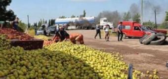 ECONOMÍA – Fruticultores | Los productores de peras piden asistencia ante abusos de los supermercados.