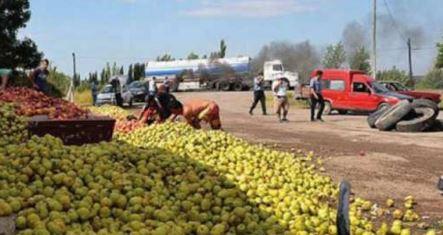 Los productores de peras tiraron 60 toneladas en la Patagonia.