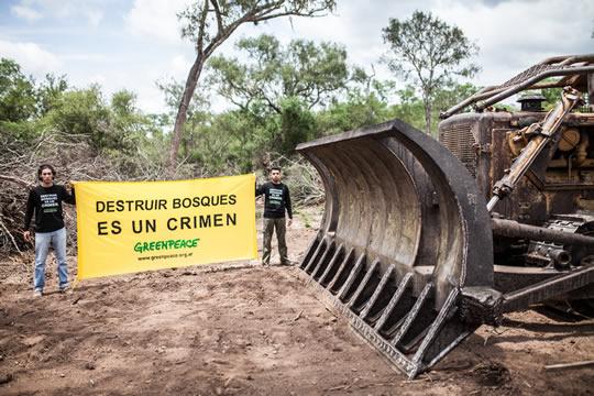 Urtubey y los Peña Braun destruyen bosques en Salta.