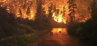 ACTUALIDAD – Argentina | Un fallecido y pobladores graves en los incendios en Patagonia.